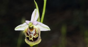 Botanische Tour während lykischen Frühling