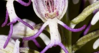 Lycian Spring Botanical Tour