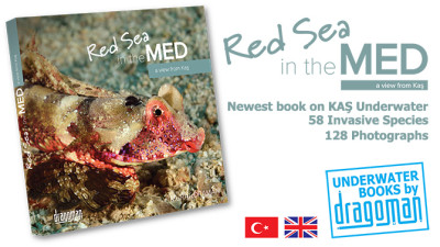 red-sea-in-the-med-kitap