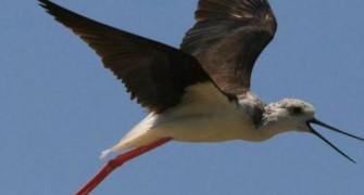 Kuş Gözlem Turu