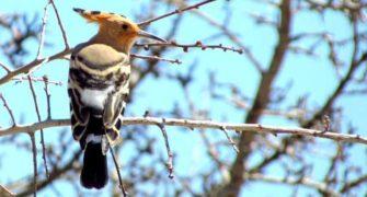 İlkbaharda Likya Kuşları