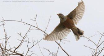 Lycian Plateau Birdwatching Tour