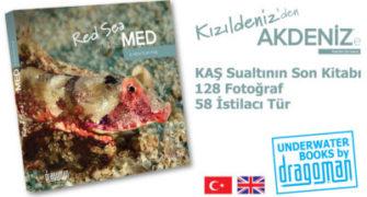 """""""Kızıldeniz'den Akdeniz'e"""" Kaş Kültürevi'nde"""