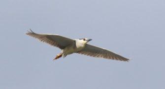 Likya Yaylalarında kuş gözlem sonrasında…