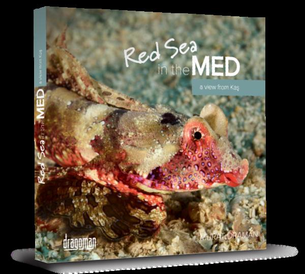Red Sea in the MED - Kızıldeniz'den Akdenize